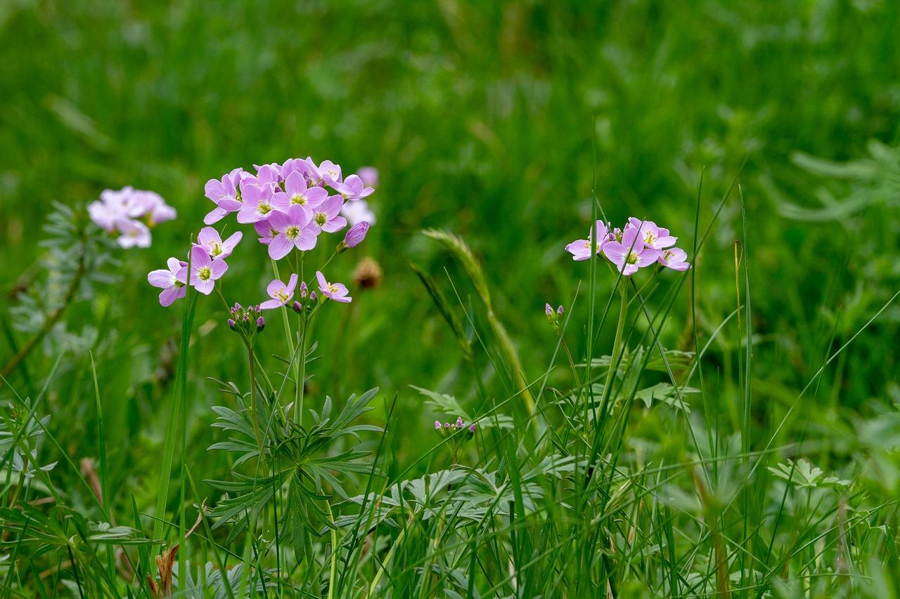 A la découverte du métier de fleuriste !